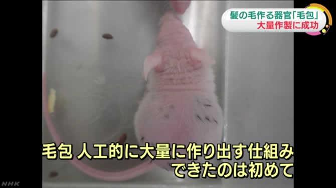 news_hatsumou_001