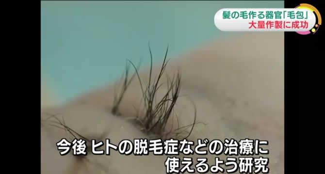 news_hatsumou_003